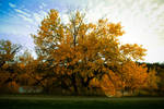 Fall Colours - 2 by sabz3003