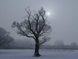 Winter sun by cjbrownie