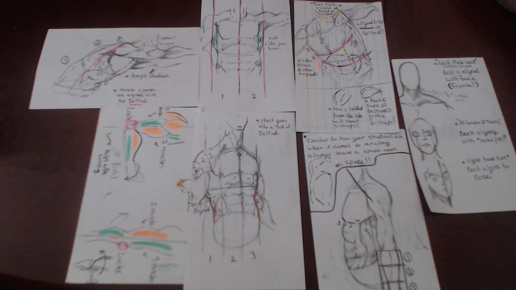 Anatomy Studies by Ogono