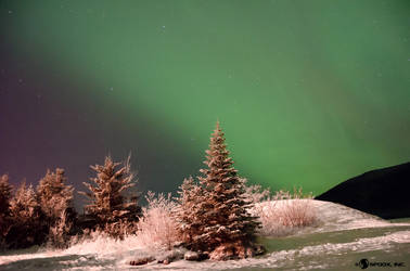 Auroras for the Holidays by spoox