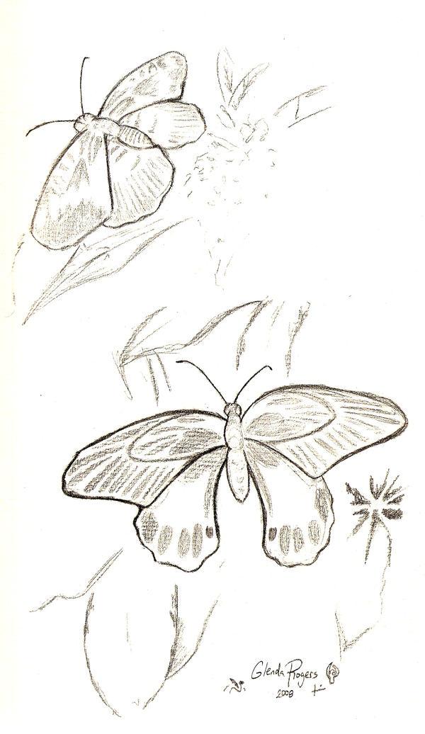 Butterflies by Jag-san