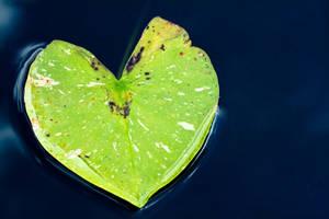 Natural Love by jvrichardson