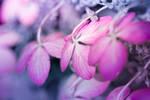 Pastel Morning by jvrichardson