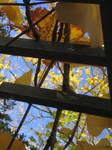 Fall Frames 1