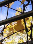 Fall Frames 2