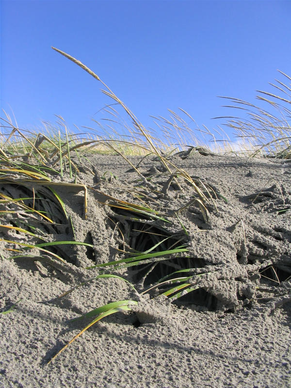Grass Caves by axcho