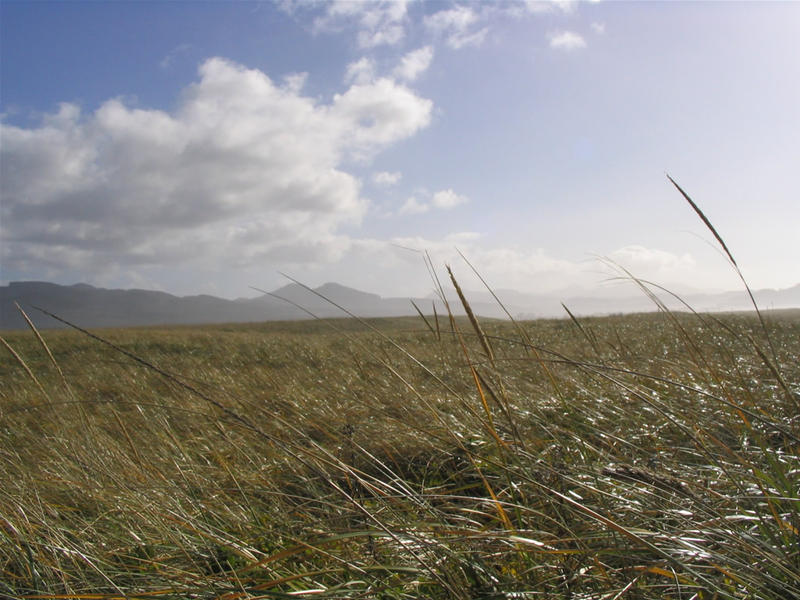Grass Ocean by axcho
