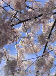 Spring Frames 1