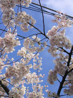 Spring Frames 2 by axcho