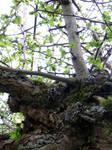 Twiggy Pole