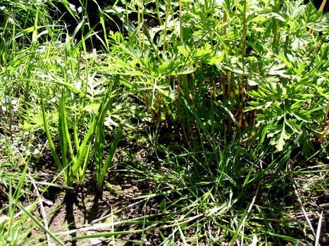 Grass Explosion