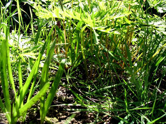 Grassy Den by axcho