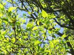 Leafy Exaltation