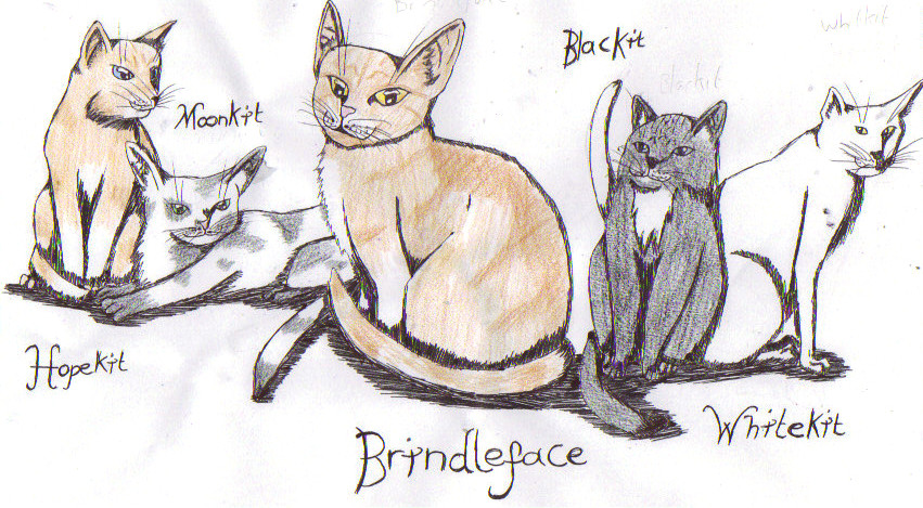 Brindleface Warriors