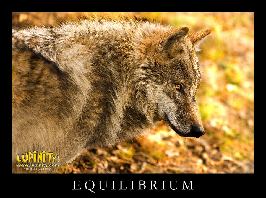 Equilibrium by Lupinicious