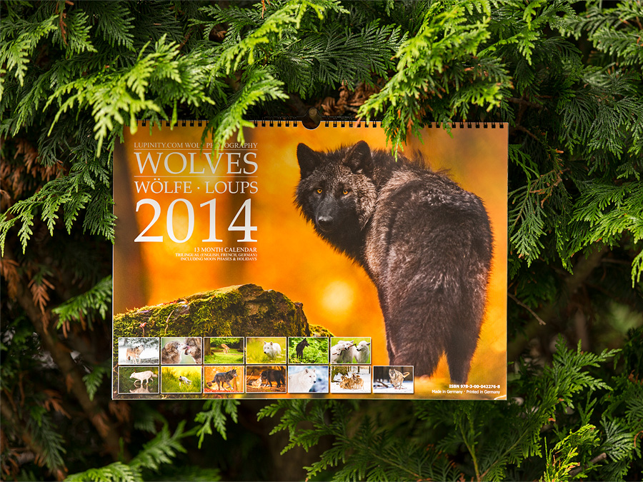 Wolves 2014 Calendar - Lookin' good in the hedge! by Lupinicious