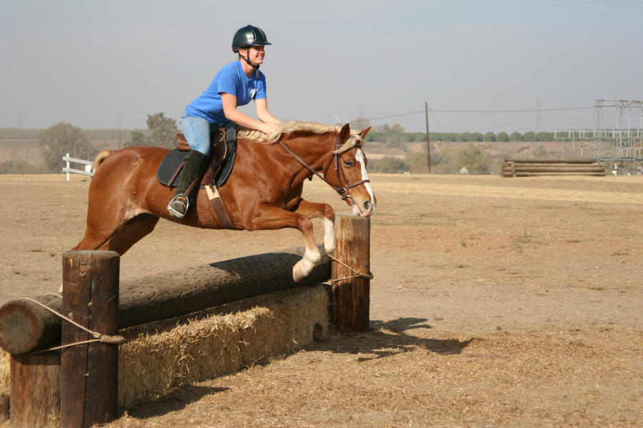 Chestnut Flaxen Mane Mare Eventing Jumping by ... - photo#17