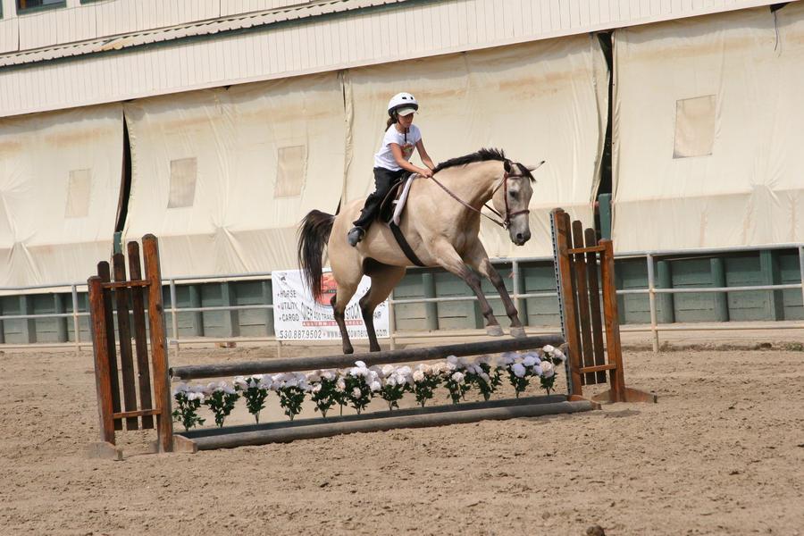 Buckskin Gelding Jumping by HorseStockPhotos