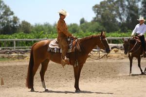 Chestnut quarter horse mare western pleasure by HorseStockPhotos