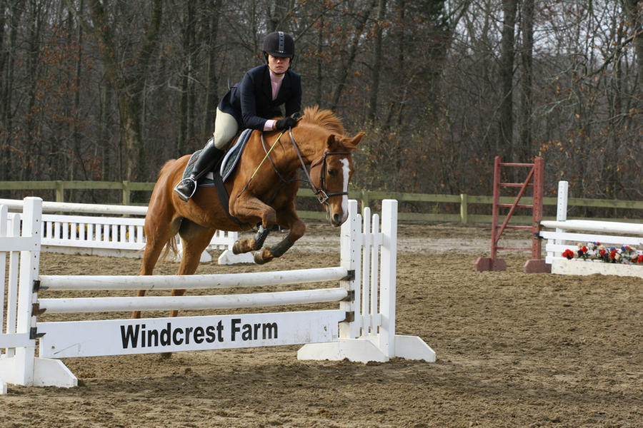 Chestnut Horse Jumping - photo#29