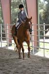 Chestnut Appendix Quarter Horse English Riding