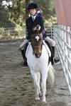 Pinto Show Pony