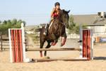 Black Thoroughbred Gelding English Riding