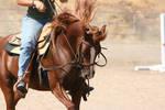 Chestnut Quarter Horse Reining by HorseStockPhotos