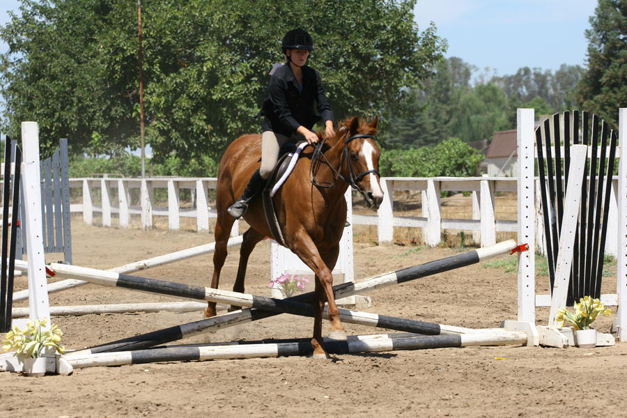 Chestnut Quarter Horse Jumping - photo#14