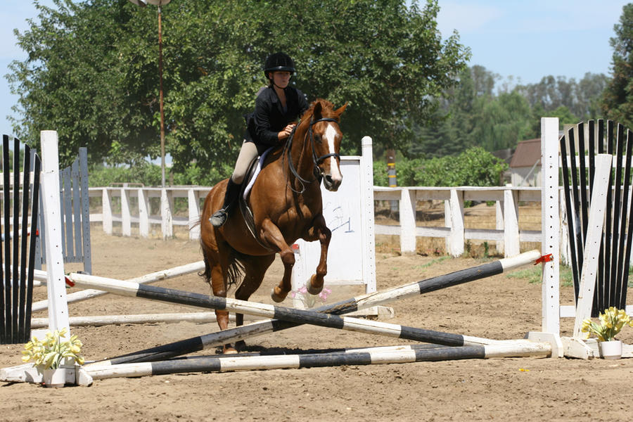 Chestnut Quarter Horse jumping crossrail by ... - photo#2