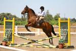 Bay Horse Jumping Crossrail