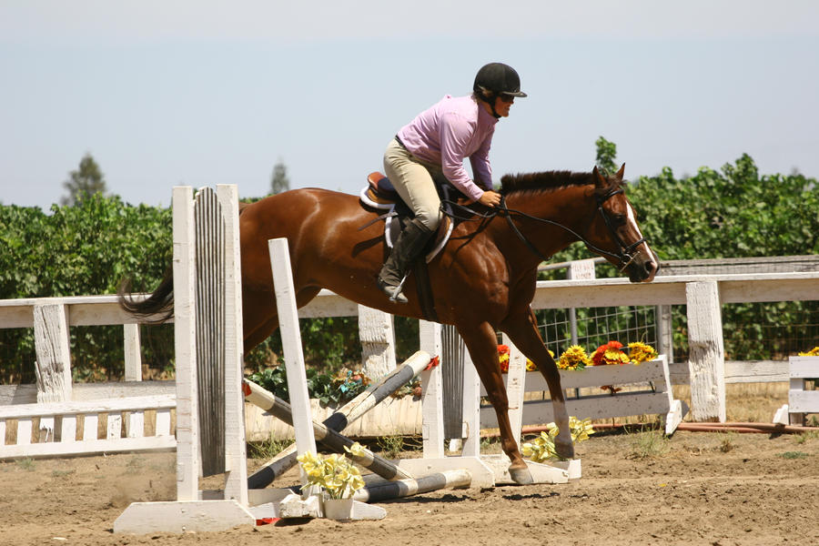 Chestnut Horse Jumping - photo#19