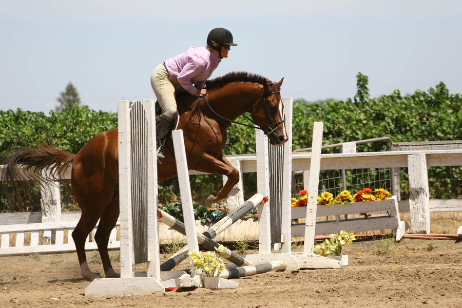 Chestnut Quarter Horse jumping crossrail by ... - photo#9