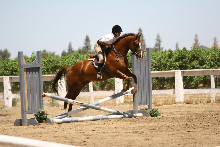 Chestnut Quarter Horse jumping crossrail by ... - photo#3