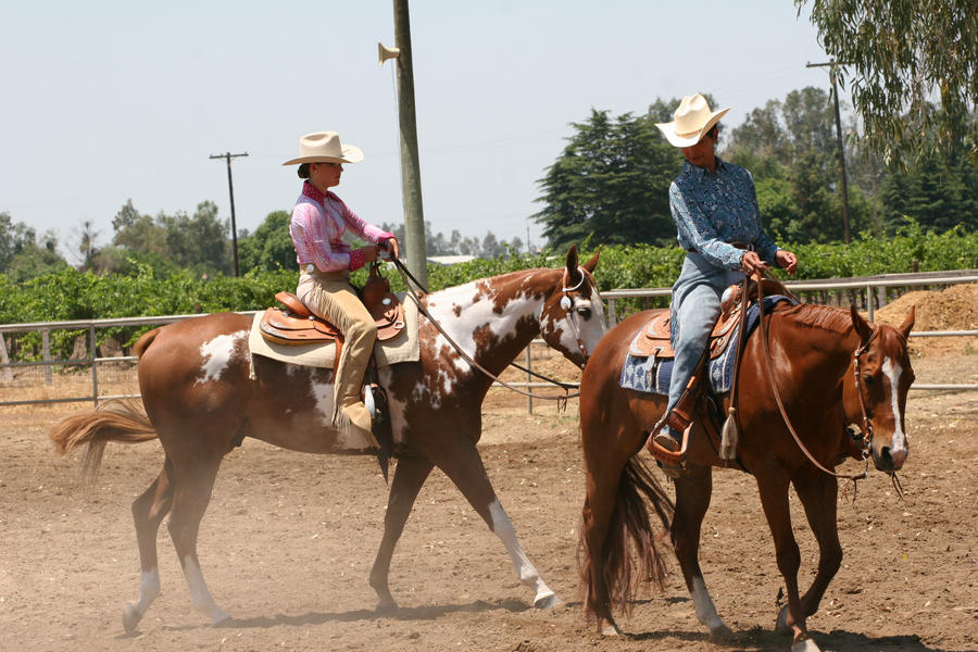 Western Horses Pictures Western Pleasure Horses by