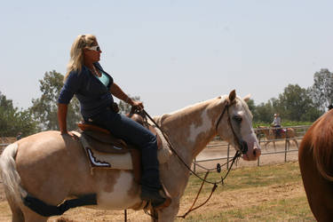 Palomino Paint Mare Western by HorseStockPhotos