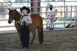 Bay Shetland Pony Western Halter Class by HorseStockPhotos