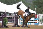 Bay Warmblood Grand Prix Jumpers