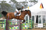 Bay Warmblood Grand Prix Jumpers
