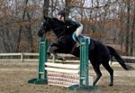Black Horse Jumping at horse show