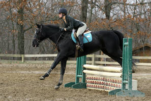 Black Horse Jumping at horse show by HorseStockPhotos