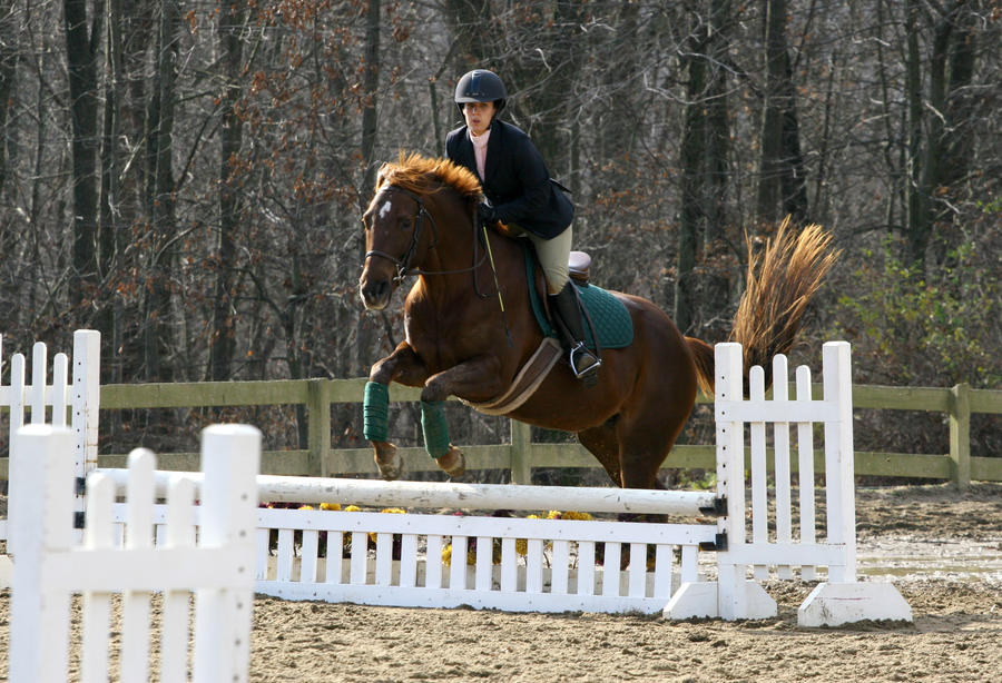 Chestnut Horse Jumping | www.imgkid.com - The Image Kid ... - photo#25