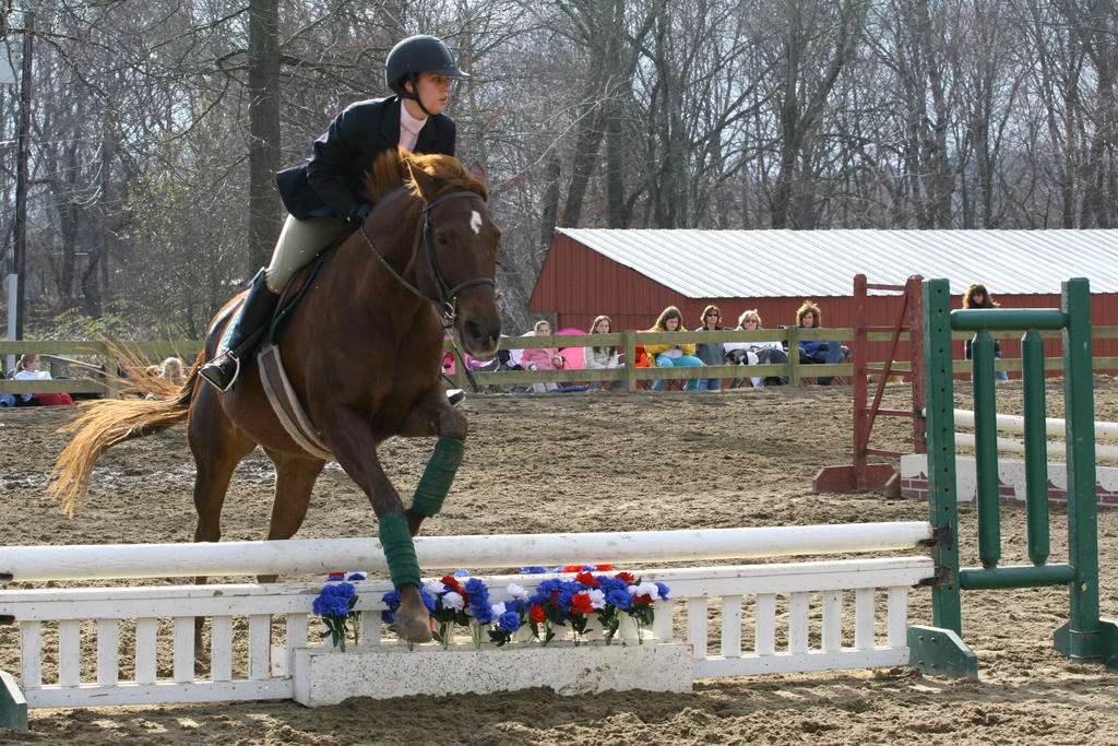 Chestnut Quarter Horse jumping by HorseStockPhotos on ... - photo#11