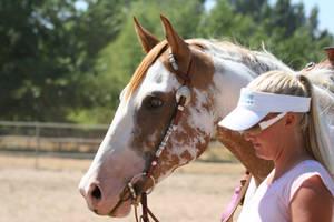 Chestnut Paint Mare - Western Pleasure by HorseStockPhotos