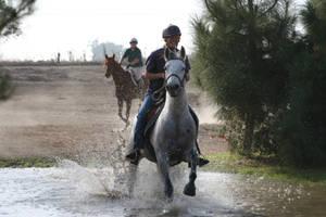Gray Arabian / Friesian Cross Mare Cross Country by HorseStockPhotos