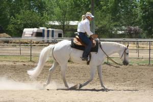 Gray Quarter Horse Gelding Western