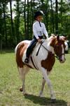 chestnut pinto mare hunter under saddle by HorseStockPhotos