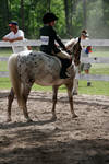leopoard pony of the americas POA show pony engish