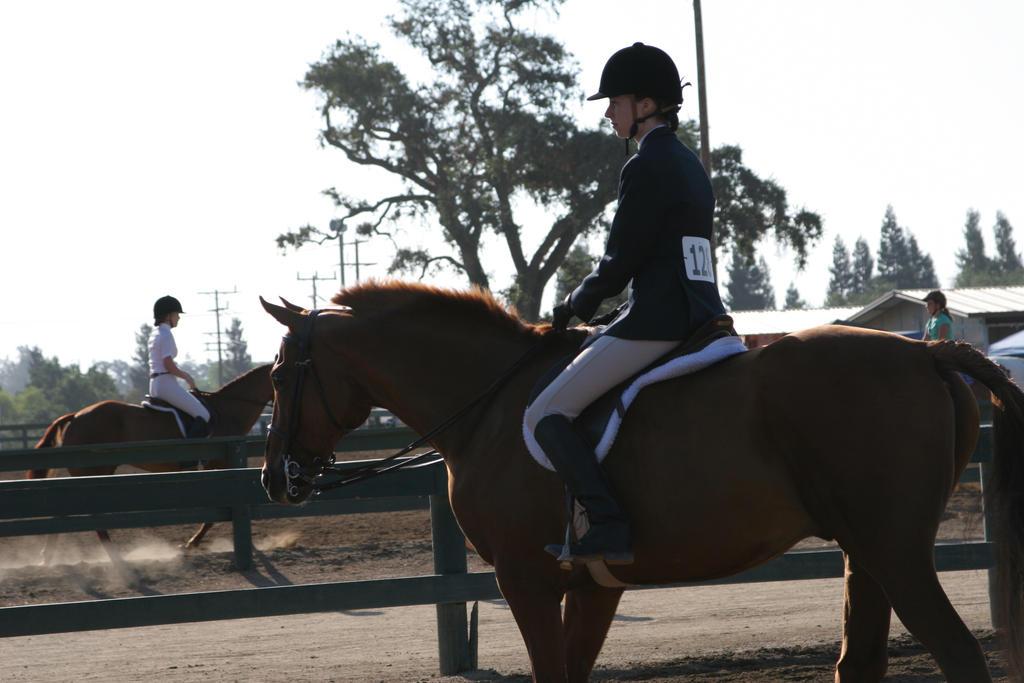 chestnut quarter horse gelding horse show by HorseStockPhotos