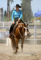 chestnut paint gelding western pleasure show by HorseStockPhotos